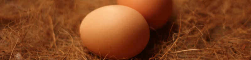 Close up of two eggs